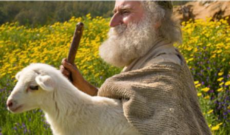 cem ovelhas