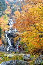 5853-silver-falls-leaf-fr1.jpg