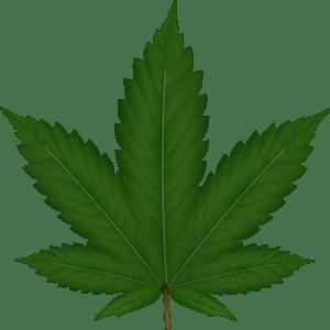 cannabis-306291