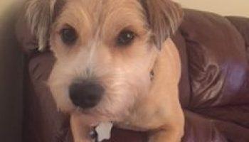 Shedding Light On Pet Custody   Men's Divorce