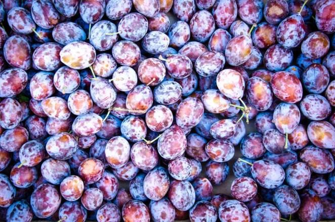 Prunes have amazing health benefits