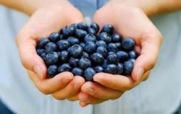 Handful of blueberries in someones hands