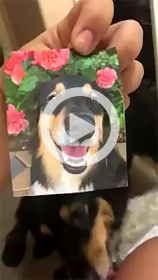 Dog Eats Picture Video