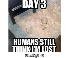 Dog Under Carpet Meme