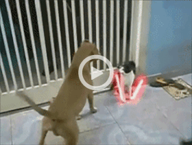 cat fighting dogs with lightsabers