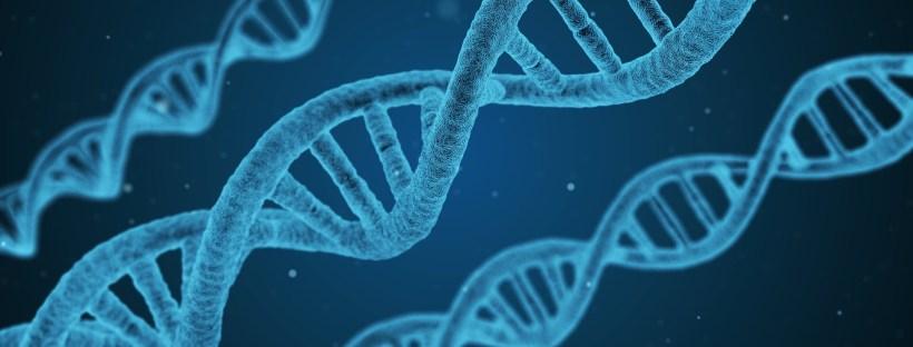 strands of DNA