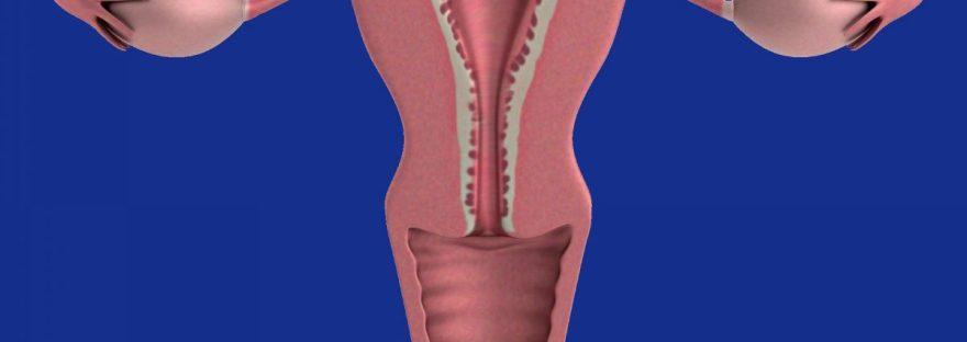 diagram of uterus and ovaries