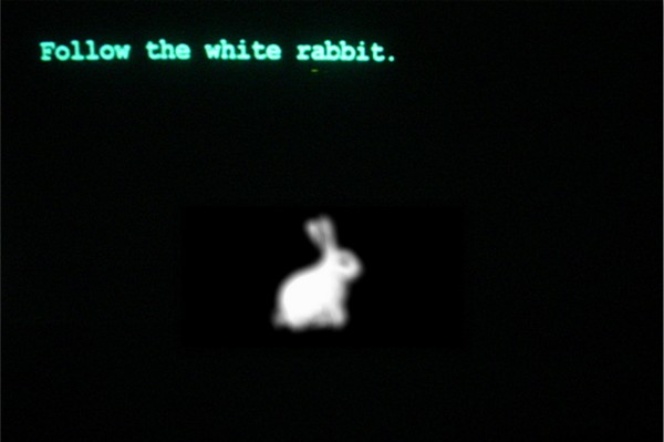 follow-the-white-rabbit-600x399