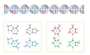 遺伝子情報から作る育毛剤