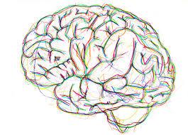 brain!!!
