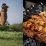 Camel Kebab in Lahore