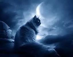 Arti Mimpi Kucing: 6 Tafsir Mimpi seputar Kucing