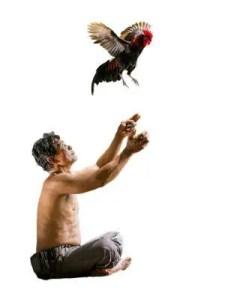 Arti Mimpi Menangkap Ayam