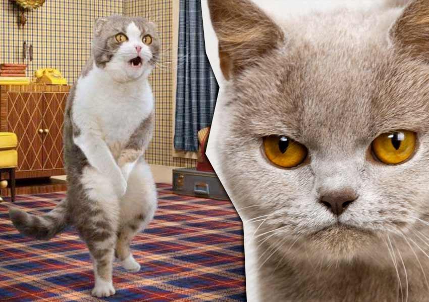 kucing buang air