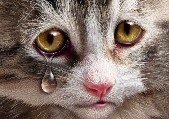 air mata kucing