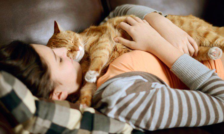 Kucing sebagai hewan terapi