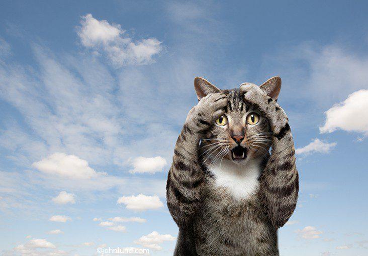Fip (Feline Infectious Peritonitis) pada Kucing