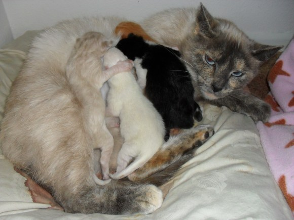 Lexi and 4 kittens