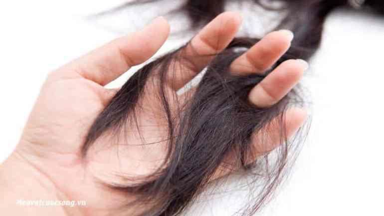 Mẹo vặt ngăn rụng tóc tại nhà hiệu quả