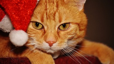 christmas in july cats feature