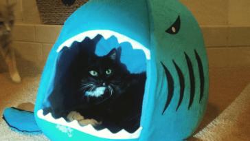 shark week cats feature