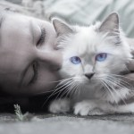 crazy cat lady quiz feature