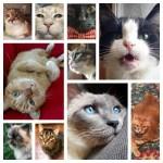 senior cat quiz feature