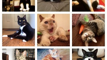tripod cat quiz feature
