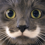 hamilton mustache cat feature