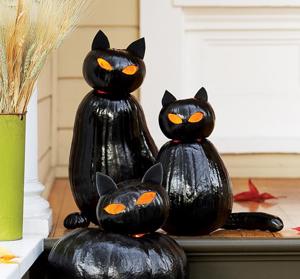 Halloween Cat Pumpkins Jack-o-lanterns