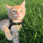 eddie ch cat feature