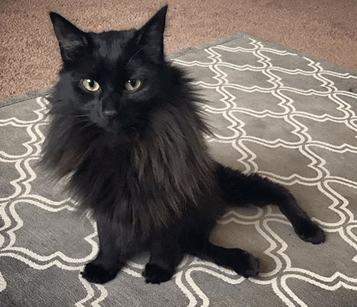 cat rotated back legs