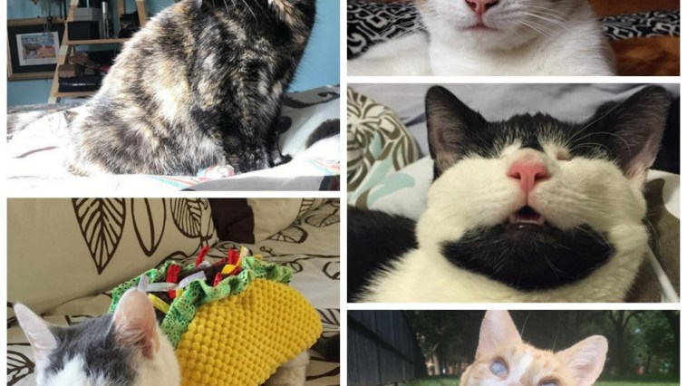 blind cat quiz feature