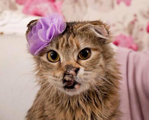 abuse survivor kitten