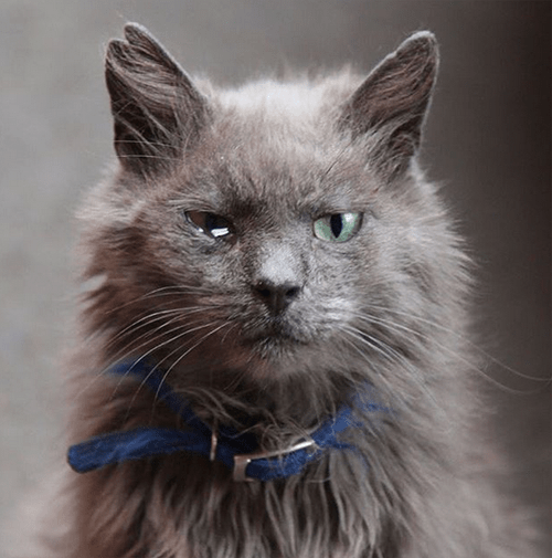 earless one eyed senior cat