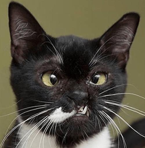 unique black and white cat