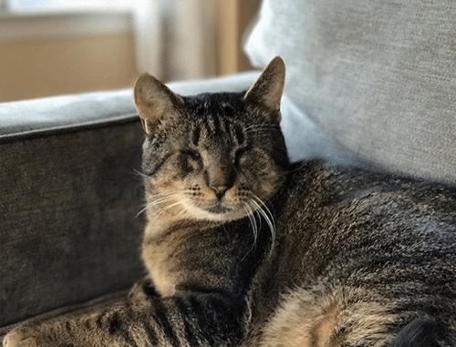 blind tabby cat