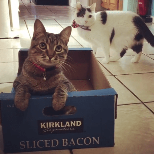 special needs cats