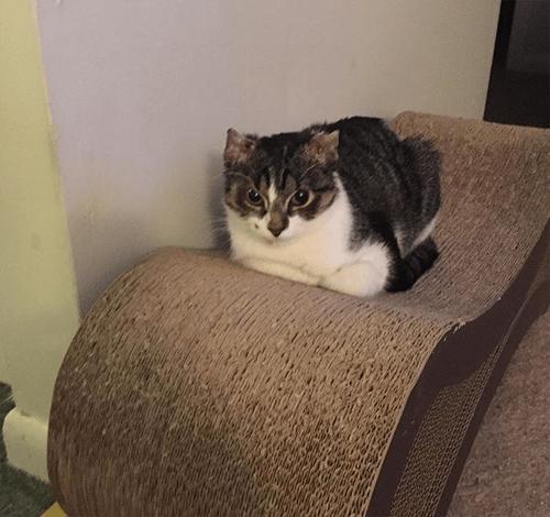 kitten cat eyelid agenesis frostbite