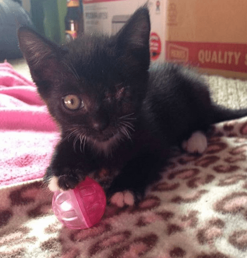 black white pirate cat