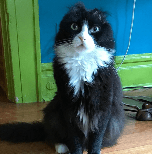 justin fire survivor earless cat
