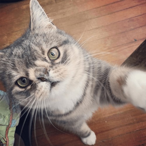 cat with chromosomal abnormalities