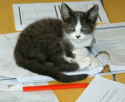 ehlers danlos cat feline cutaneous asthenia
