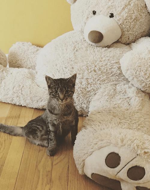 two legged cat kitten