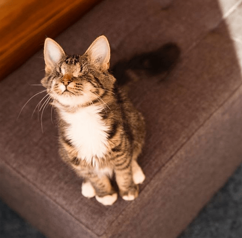 blind adventure kitten