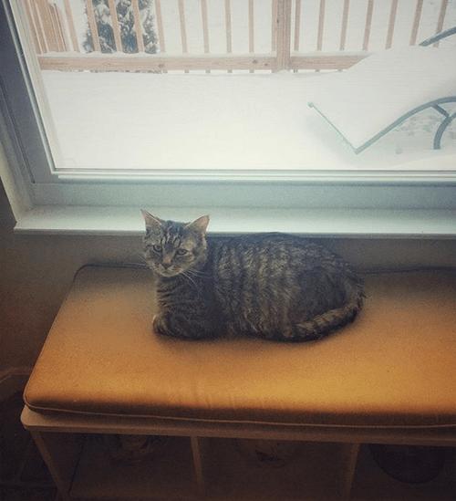 two legged cat
