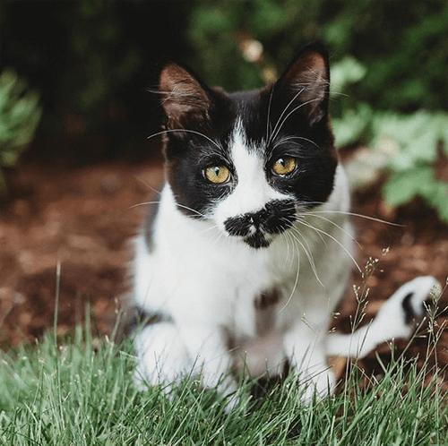 kittens with tibial hemimelia