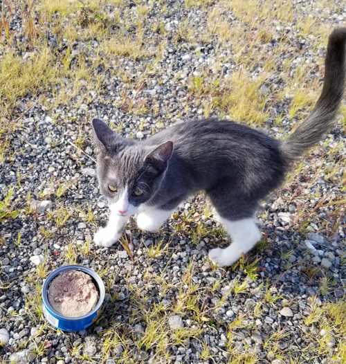 rescue cat with colitis and heart murmur
