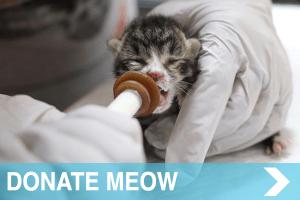 meow co - donate - DONATE MEOW