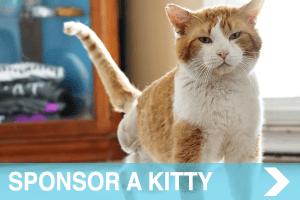 meow co - donate - SPONSOR